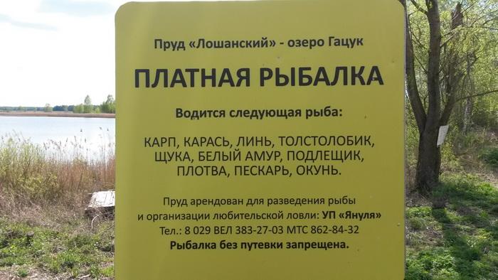 Ситуация с платной рыбалкой на озере Гацук в Слуцком районе   2 ...