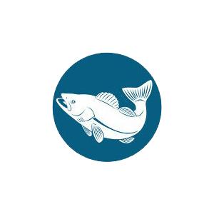 Аватар пользователя antfish